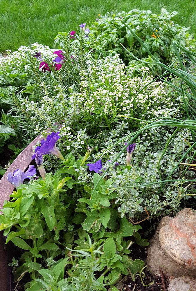 Backyard Herb Garden