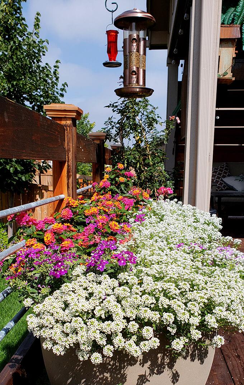 Flowers on the Backyard Deck in Pots under Bird Feeders